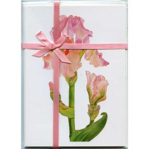 Bearded-Iris-Blossom-Gift-Pack-