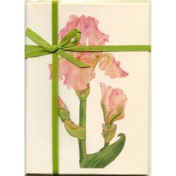Bearded-Iris-Blossom-Gift-Pack-Cream-