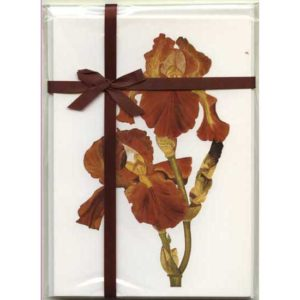 Bronze Bearded Iris Gift Pack White