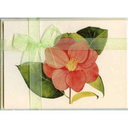 Camellia-Gift-Pack-Cream