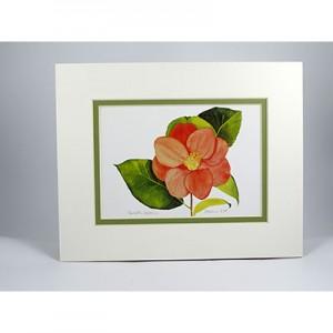 Camellia-Japonica,-W.GP