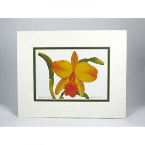 Cattleya-Hazel-Boyd,-White.. Forest Green