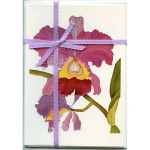 Cattleya-Orchid-