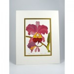 Cattleya-Orchid,-White.Gold