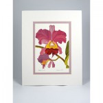 Cattleya-Orchid,-White.Lavender