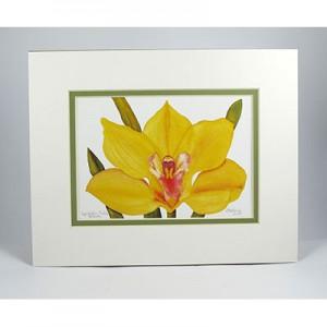 Cymbidium-Orchid-Blossom,-W.Green Pear