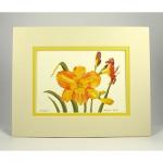 Daylilies,-Cream.Yellow