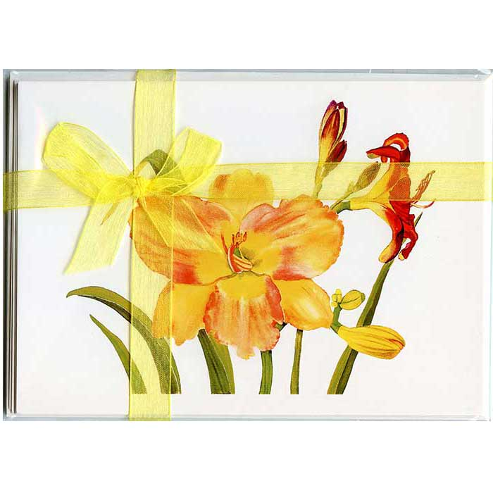 Daylilies-Gift-Pack-