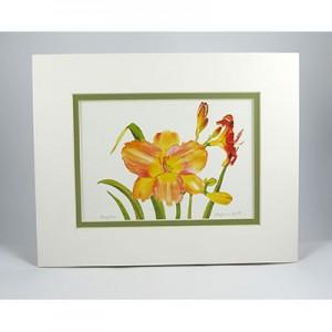 Daylilies,-W.GP