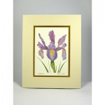 Dutch-Iris,-Cream.Gold