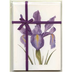 Dutch Iris Gift Pack White