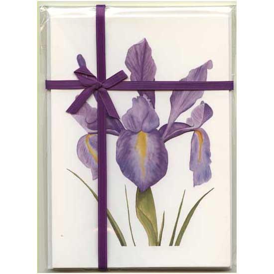 Dutch Iris Gift Pack White