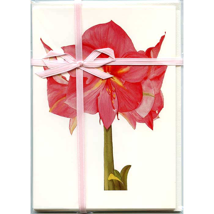Pink-Amaryllis-Gift-Pack-
