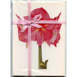 Pink-Amaryllis-Gift-Pack-Cream