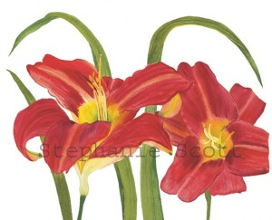 Red Daylilies