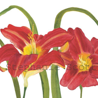 Flower Cards, Prints, Bookmarks