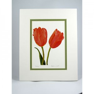 Tulips,-W.GP.