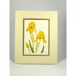 Yellow-B.-Iris,-Cream.Gold