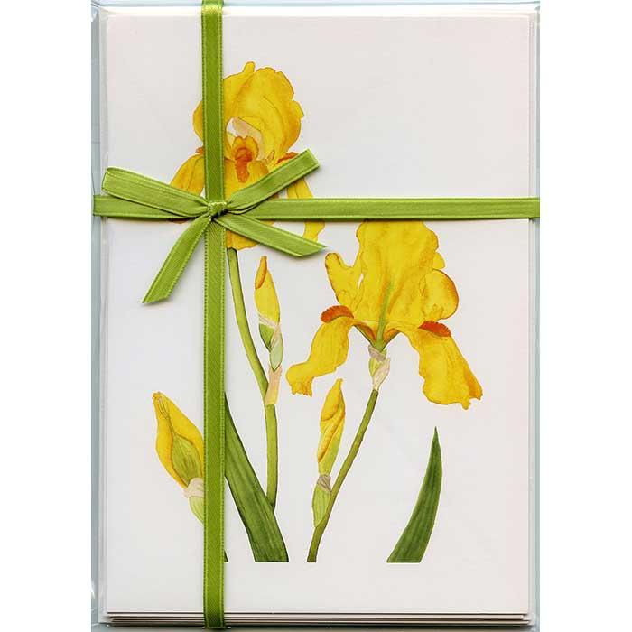 Yellow-Bearded-Iris-Gift-Pack-