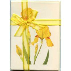 Yellow-Bearded-Iris-Gift-Pack-Cream-