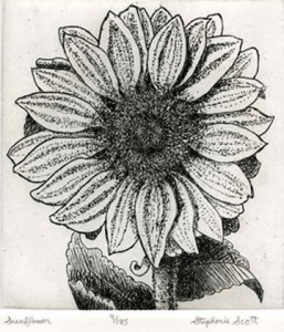 Sunflower Etching