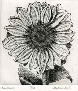 Sunflower Etching