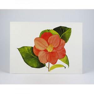 Camellia-White-NC-SC