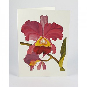 Cattleya-Orchid-White-NC-SC