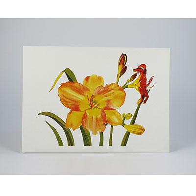 Daylilies-White-NC-SC