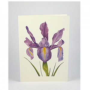 Dutch-Iris-White-NC-SC