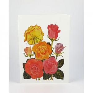 Roses-White-NC-SC