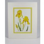 Yellow Bearded Iris - White. Yellow
