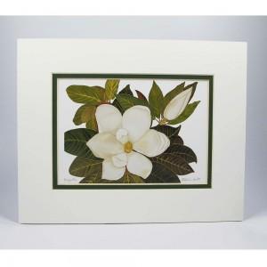 magnolia-white-dkgr