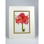 Pink-Amaryllis,-White-Gold ,jpg