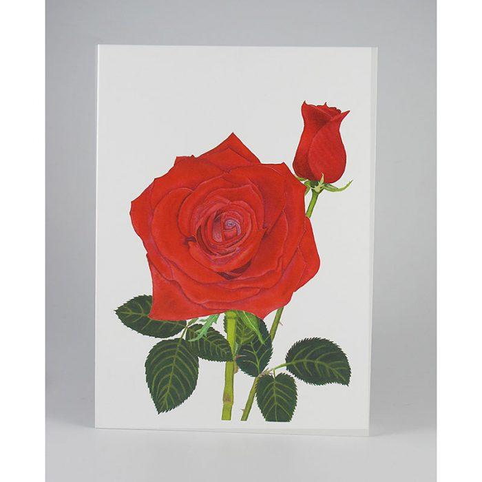 Red-Rose-White-Web