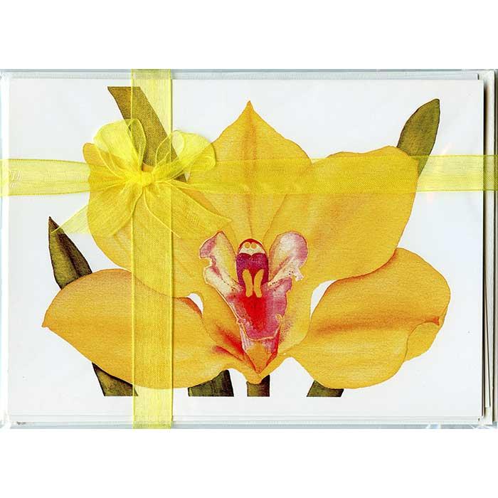 Cymbidium-Orchid-Gift-Pack-1