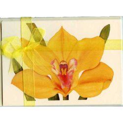 Cymbidium-Orchid-Gift-Pack-Cream