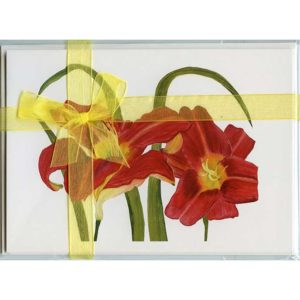 Red-Daylilies-Gift-Pack-White