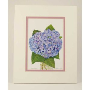 hydrangea white lavender