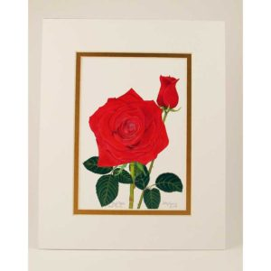 red rose bud white gold