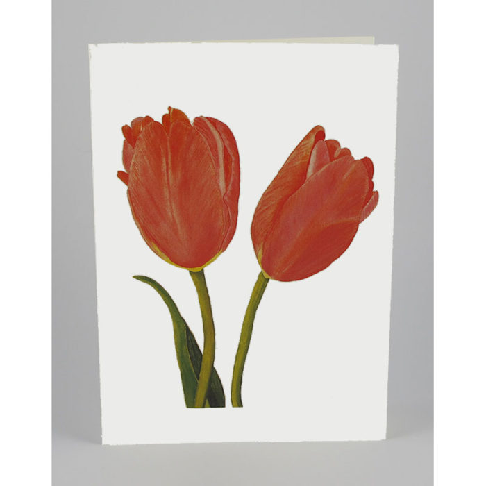 tulips-white-notecard
