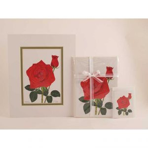 Red-Rose-Bud-Combo-3-White