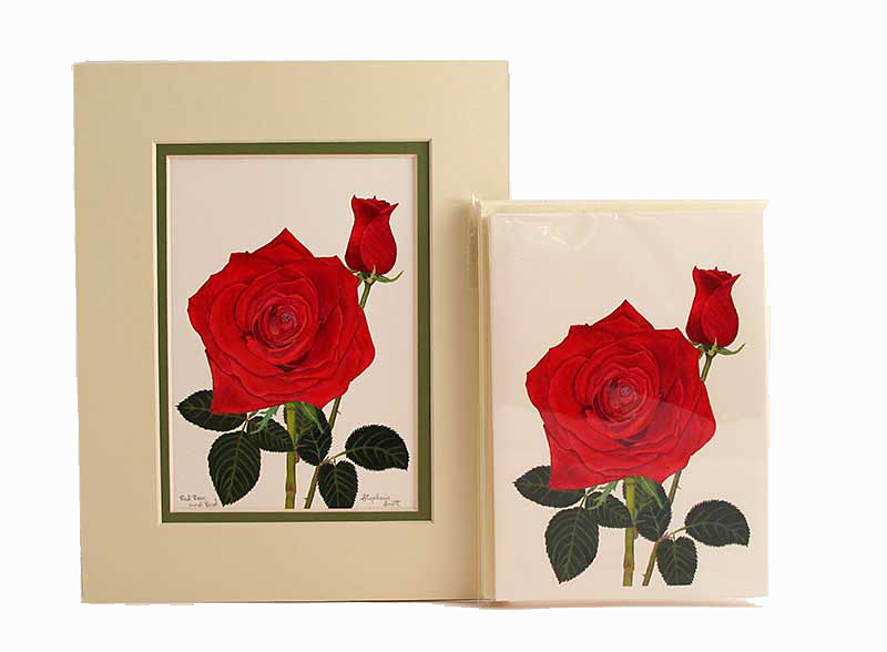 Red Rose & Bud. Cream Outer Mat, Forest Green Inner Mat, Matching Cream Notecards