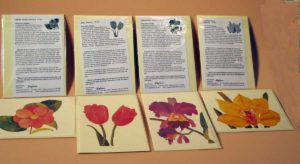 Notecards in Protective Crystal Clear Sleeve with Insert and the Story of the Painting